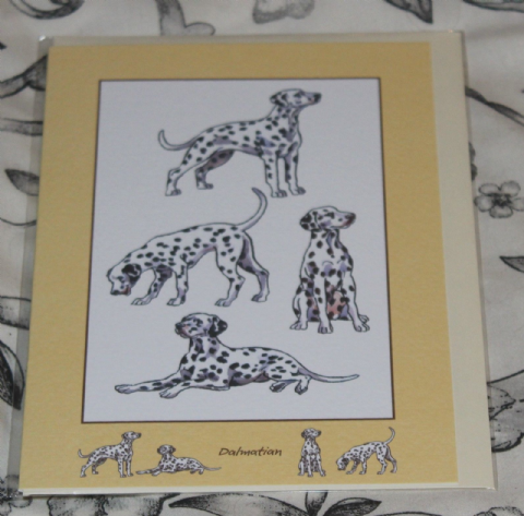 DALMATION GREETINGS CARD with pictures of the breed